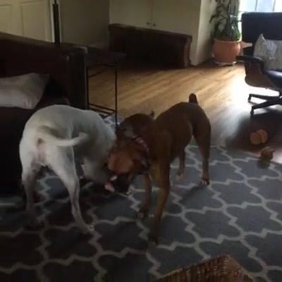 live-crazy-dogs_thumbnail.jpg